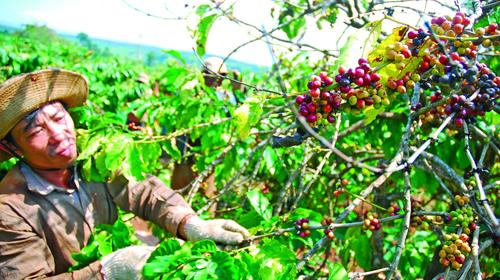 Doanh nghiệp FDI bị cấm thu mua nông sản từ 07/06/2013