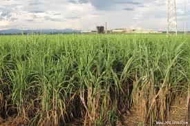 """""""Đại gia"""" bất động sản chuyển hướng đầu tư nông nghiệp"""