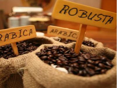 Giá Cà phê arabica và ca cao ngày 17/02/2014 phục hồi tăng liên tiếp