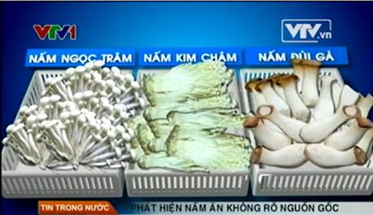 Ai phải chịu trách nhiệm khi nấm cơ sở Lưu Mai Hương không rõ nguồn gốc vào siêu thị?