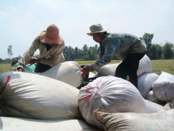 Giá gạo ngày 14/5/2014 | GIA GAO tại Viet nam, Thai Lan, An Do