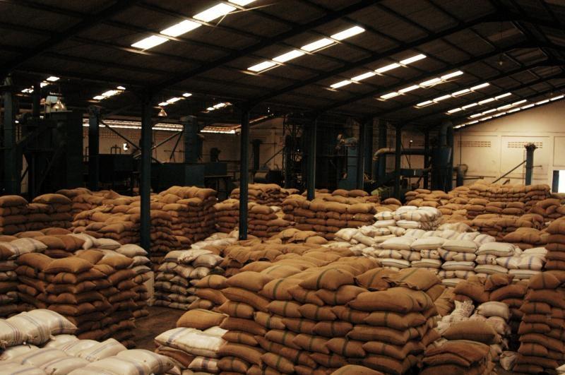 Indonesia: Kim ngạch xuất khẩu cà phê tăng do hạn hán tại Brazil