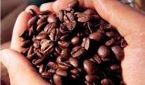 Giá cà phê ngày 19/8/2014