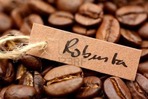 Giá cà phê arabica tăng mạnh nhưng tiêu thụ cà phê vẫn cao