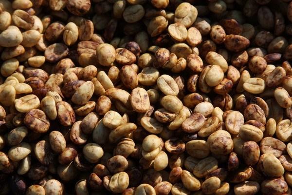Nguồn cung dồi dào kéo giá cà phê, ca cao thế giới tiếp tục giảm