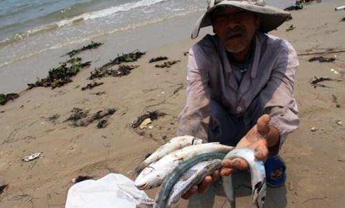 Tin mới nhất vụ cá chết ở miền Trung ngày 30/6/2016: Sắp trình CPchính sách hỗ trợ ngư dân