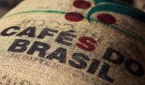 Cooxupe giảm dự báo sản lượng cà phê Brazil năm 2014
