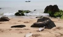 Thủ phạm, nguyên nhân gây cá chết ở Miền Trung: Dự kiến công bố ngày 30/6